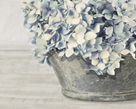 Hydrangea Bunch by Mark Chandon
