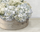 Hydrangea Cluster by Mark Chandon