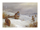 Partridges and Hare by Archibald Thorburn