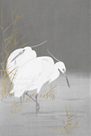 Two Egrets in the Reeds by Ohara Koson