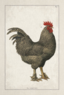 Farmyard Roost by The Vintage Collection