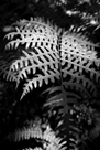Fern Flicker by Matthew Roseveare