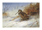 Winter Woodcocks by Archibald Thorburn