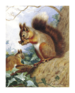 Squirrels in a Tree by Archibald Thorburn