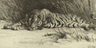 Tiger Resting by Herbert Dicksee