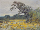 Coreopsis, Near San Antonio, Texas by Julian Onderdonk