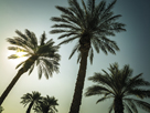 Sunshine Palms by Assaf Frank