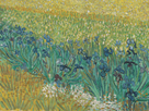 Field with Irises Near Arles - Focus by Vincent Van Gogh