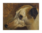 The Head Of A Whippet by Edwin Landseer