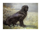 Jewelstone - A Flatcoated Retriever by Lilian Cheviot