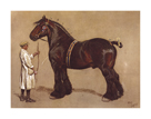 The Shire Horse by Cecil Aldin