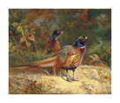 Cock and Hen Pheasants in the Woodlands by Archibald Thorburn