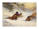 Pheasant and Two Hens by Archibald Thorburn