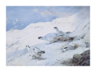 Woodcock in a Snowy Highland by Archibald Thorburn