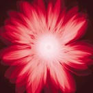 Radiant Gerbera by Hugh Turvey