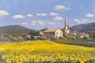 'Sunflowers', Provence by Clive Madgwick