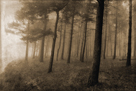 Ethereal Woodland by Pete Kelly