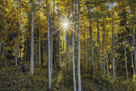 Woodland Sunburst by Michael Greene