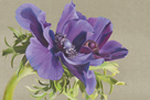Reverence of Anemones by Sarah Caswell