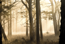 Peaceful Woodland by Matthew Roseveare