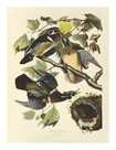 Summer or Wood Duck by James Audubon
