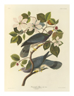 Band Tailed Pigeon by James Audubon