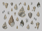 Selection of Shells Conchology by Maria Mendez