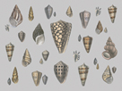 Selection of Shells Compendium by Maria Mendez