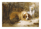 Study Of Dogs by Edwin Landseer