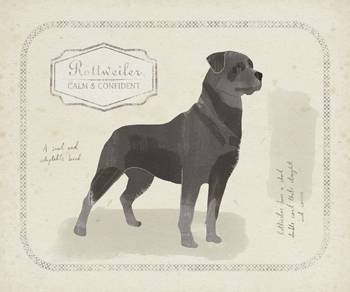 Dog Club - Rottweiler Print by Clara Wells
