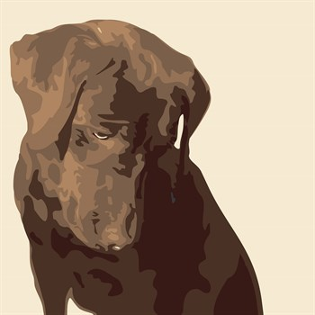 Chocolate Labrador Print by Emily Burrowes