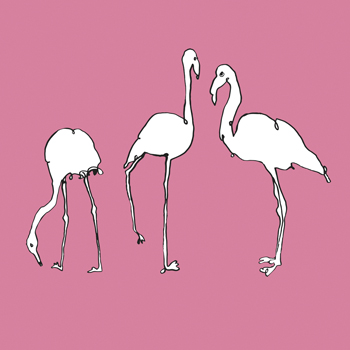 Flamingo Trio Print by Sandra Jacobs