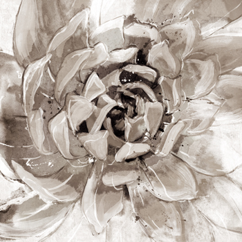Cereus Aeonium - Fawn Print by Tania Bello