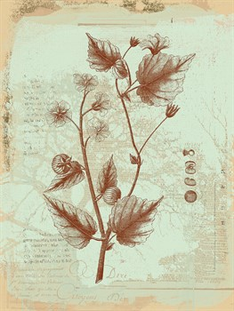 Botanical II Print by Ken Hurd