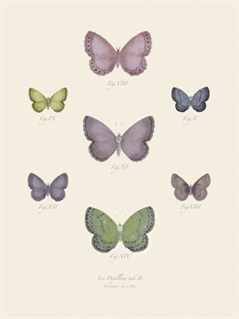 Collection de Papillons II Print by Maria Mendez