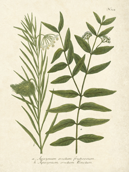 Botanica Indicum Print by The Vintage Collection