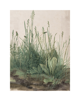 The Large Piece of Turf, 1503 Fine Art Print by Albrecht Durer