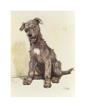 A Thoroughbred Mongrel Fine Art Print by Cecil Aldin