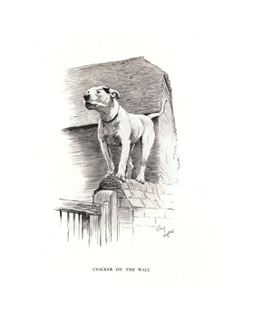Cracker on the Wall Fine Art Print by Cecil Aldin