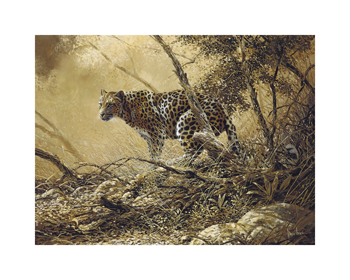 Leopard Fine Art Print by Spencer Hodge