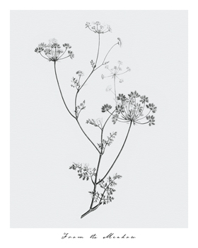 From the Meadow Print by Maria Mendez