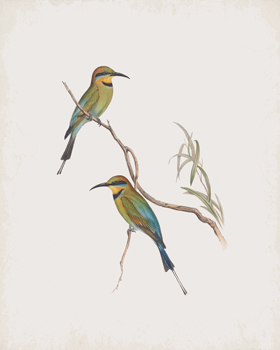 Merops Ornatus Canvas Print by John Gould