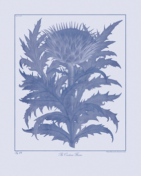 Botanicus Ink - Cardoon Canvas Print by Maria Mendez