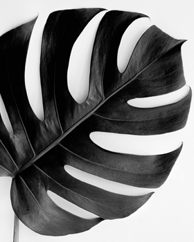 Monstera Solo - Noir Canvas Print by Irene Suchocki