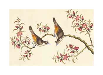 Birds And Flowers On Branch Fine Art Print by Anonymous