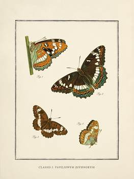 Papilio Collectio Canvas Print by The Vintage Collection