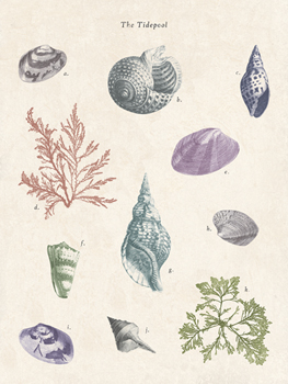 The Tidepool Print by The Vintage Collection
