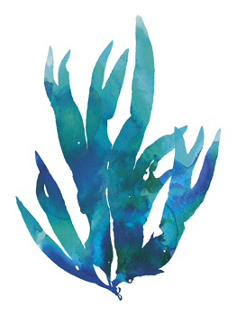 Ocean Feather IV Print by Tania Bello