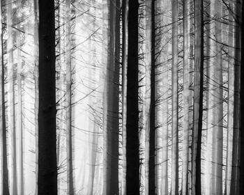 Between the Trees Print by Mikael Svensson