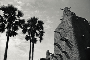 Palms and Adobe Print by Andrew Geiger